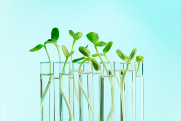 Green plants in a row of test tubes with water