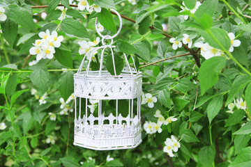 White vintage birdcage hanging on branch