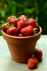 Ripe sweet strawberries in pot on table in garden