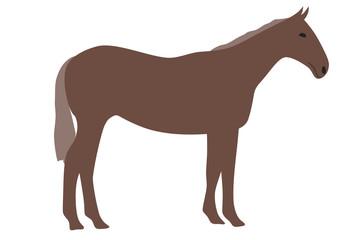 馬のイラスト 右向き