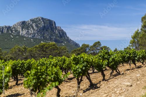Foto op Plexiglas Cultuur vigne