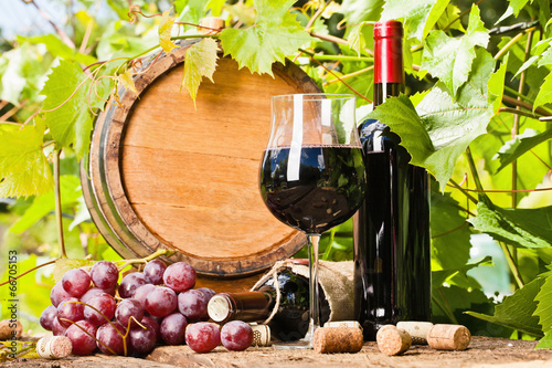 Wine, grapes and grapevine composition