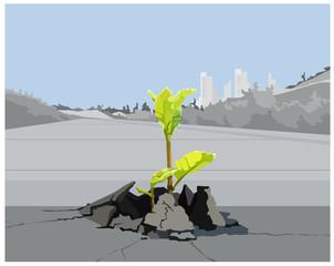 sprout plants split road surface