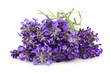 Bunch of lavender flowers on white background