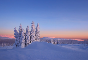 The snow-bound forest is in the mountains of North Ural