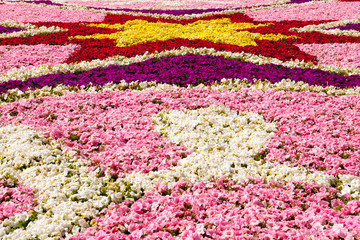 Floral Display, St George Square, Valletta, Malta