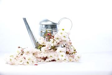 Gießkanne mit Kirschblueten