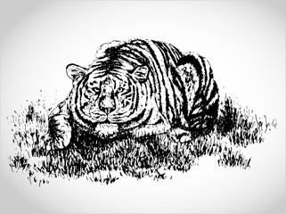 Tiger in the grass illustration