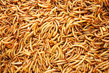 A Background of Dried Meal Worms
