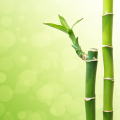 Beautiful Bamboo Border