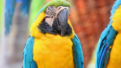 portrait of colorful parrot macaw
