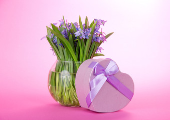 Squills in vase and gift with a ribbon