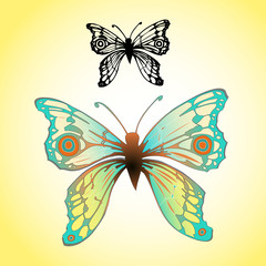 Turquoise butterfly illustration