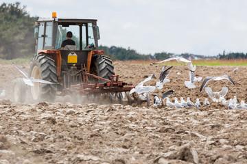 Agriculture, labour
