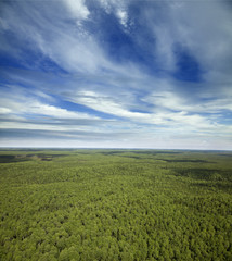 Boundless forests in summer, top view