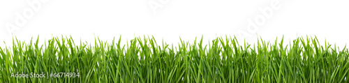 Green grass isolated on white background. - 66714934