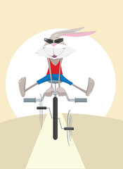 Rabbit on bicycle