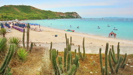 cacti and beach