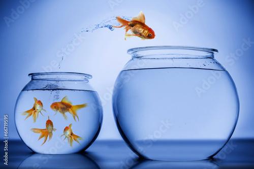 Fish happily jumping - 66719595