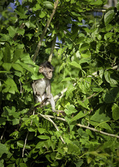 Young wild monkey on the tree