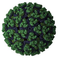 Chikungunya virus. Causes chikungunya disease.