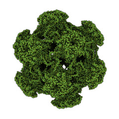 Human papillomavirus (HPV) 16. HPV causes skin and genital warts