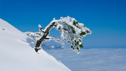 Зимнее дерево