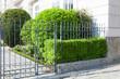Vorgarten mit Zaun