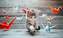 "Постер, картина, фотообои ""Kitten is playing with paper cranes"""