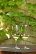 Wine tasting at Tokaj winery backyard, Hungary