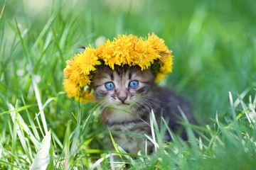 Cute little kitten crowned with chaplet of dandelion in grass