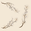 Plum blossom with line design in three different compositions.