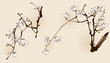 Plum blossom with line design in two different compositions.
