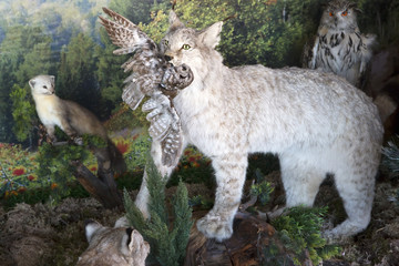 Stuffed lynx prey to their teeth.