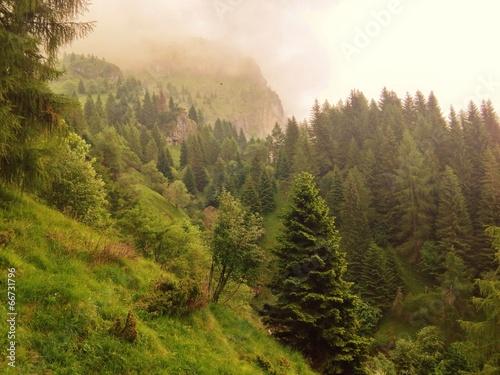 canvas print picture Märchenwald im Nebel
