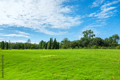 canvas print picture park grass in the morning