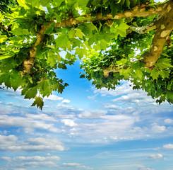 Sommer-Entspannung: Unter Platanenkrone mit blauem Himmel :)