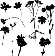 ten wild flowers on white illustration