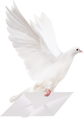 white dove with mail illustration