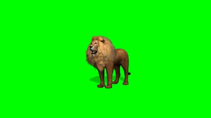 lion howl on green screen