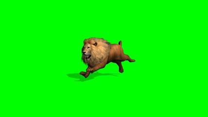 lion runs on green screen