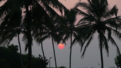 Palm trees silhouette and a sunset