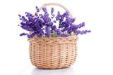 basket of lavender - 66740309