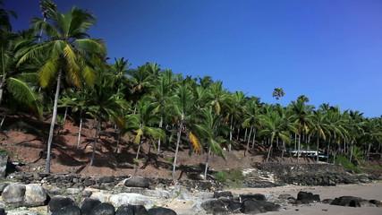 The seashore with palm trees. India. Kerala.
