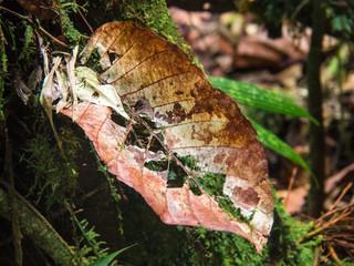 altes Blatt im Regenwald