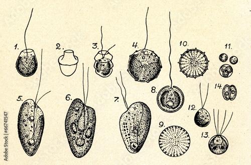 Nanoplankton - 66741547