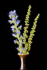 Viper's Bugloss and Herbs