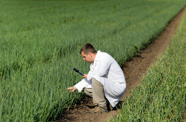Agronomist in onion field