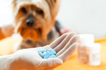 Vet with dog pills.