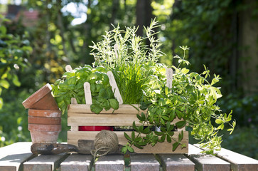 pots and herbs